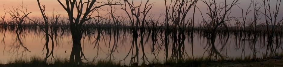 Ashmead Swamp at dusk 2