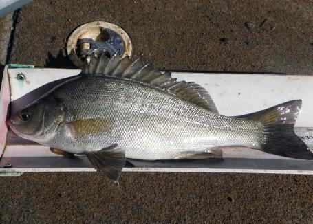 fauna fish